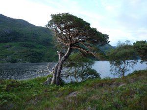 Schottland Knoydart 2010